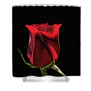 Chromatic Rosebud Shower Curtain