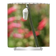 Chrysalis On A Summer Day Shower Curtain