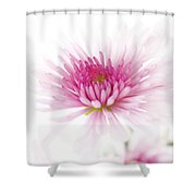 Chrysanthemum #003 Shower Curtain