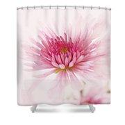 Chrysanthemum #004 Shower Curtain