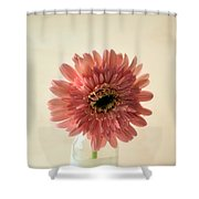 Chrysanthemum #029 Shower Curtain