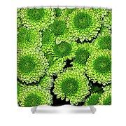Chrysanthemum Green Button Pompon Kermit Shower Curtain
