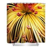 Chrysanthemum Morning Shower Curtain