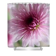 Chrysanthemum #001 Shower Curtain