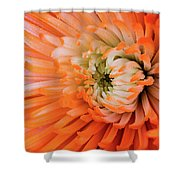 Chrysanthemum Serenity Shower Curtain