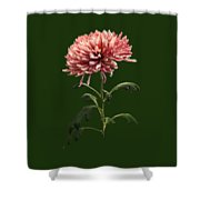 Chrysanthemum Shelbers Shower Curtain