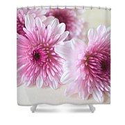 Chrysanthemums #009 Shower Curtain