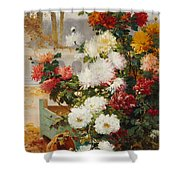 Chrysanthemums In A Walled Garden Shower Curtain