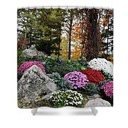 Chrysanthemums In The Garden Shower Curtain