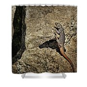 Chuckwalla - Crevice Shower Curtain