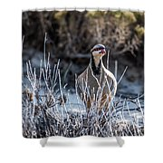 Chukar Shower Curtain