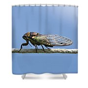 Cicada On The Line Shower Curtain