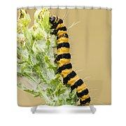 Cinnabar Moth Caterpillar Shower Curtain
