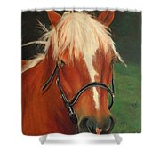 Cinnamon The Horse Shower Curtain