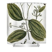Cinnamon Tree, 1735 Shower Curtain