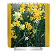 Circle Of Daffodils Shower Curtain