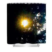 Circle Of Sunglow Through Pine Shower Curtain