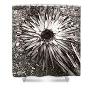 Circle Top Of Joshua Tree Shower Curtain