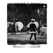 Circus: Polar Bears Shower Curtain