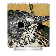 Ciripica Shower Curtain