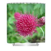 Cirsium Burgandy Thistle Shower Curtain