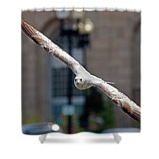 City Gull Shower Curtain