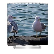 City Gulls Shower Curtain