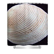 Clam Shell Shower Curtain