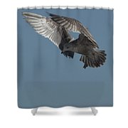 Clams For Dinner 3 Shower Curtain