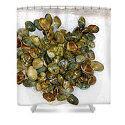 Clams In The Fish Market Shower Curtain
