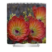 Claret Cup Cactus - Three Of A Kind  Shower Curtain
