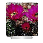 Claret Cups 2 Shower Curtain