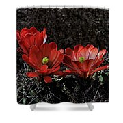 Claret Cups Shower Curtain