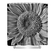 Classic Black And White Sunflower Shower Curtain