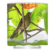 Clay-colored Robin Shower Curtain