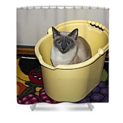 Cleaning Cat Shower Curtain