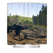 Clearcut Logging Site Shower Curtain