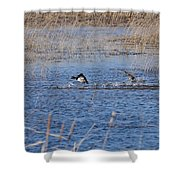 Cleared For Takeoff-ring-necked Ducks  Shower Curtain