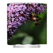 Clearwing Hummingbird Moth Shower Curtain