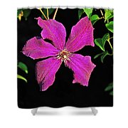Clematis 2598 Shower Curtain