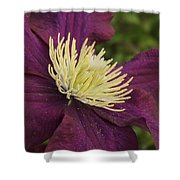 Clematis 4000 Shower Curtain