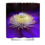 Clematis Aglow Shower Curtain