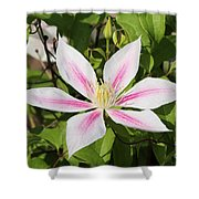 Clematis Andromeda Shower Curtain