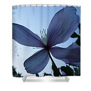 Clematis At Dusk Shower Curtain