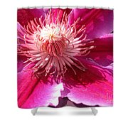 Clematis Bloom.. Shower Curtain