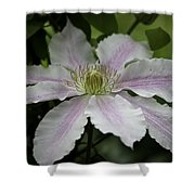 Clematis Blossom Shower Curtain