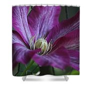 Clematis Close-up Shower Curtain