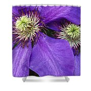 Clematis Detail Shower Curtain