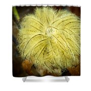 Clematis Flower Head In Fall Shower Curtain