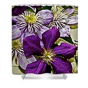 Purple Clematis Flower Vines Shower Curtain